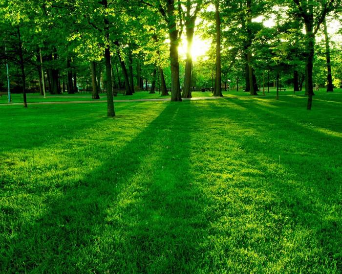 Green-Landscape-Wallpaper-HD-49